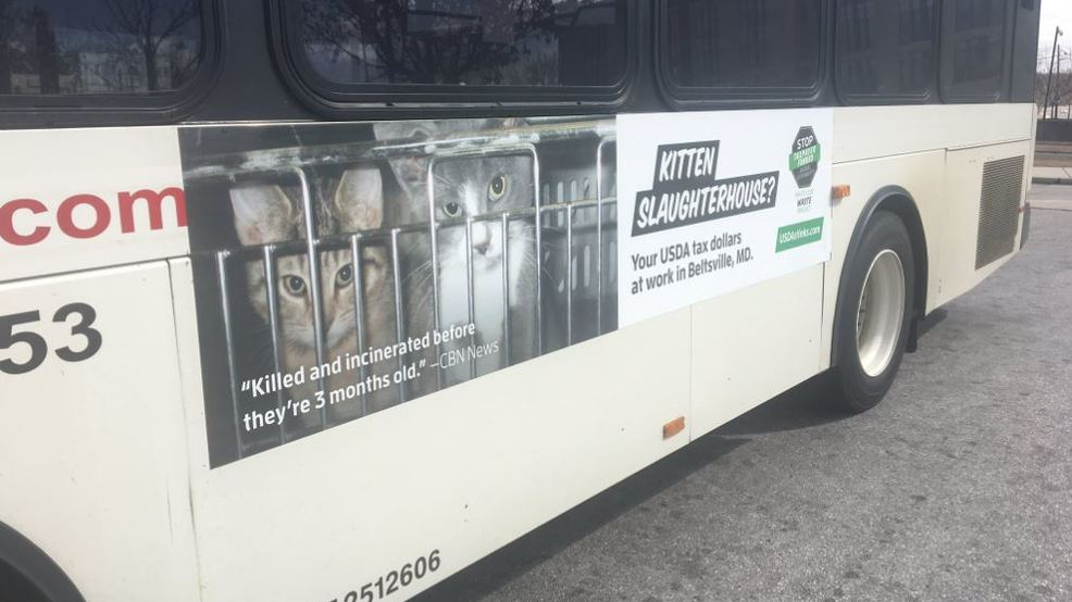 Anti-kitten lab ads appear on Md  buses, trains after