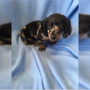 Puppy stolen from Dog Town Pet Resort