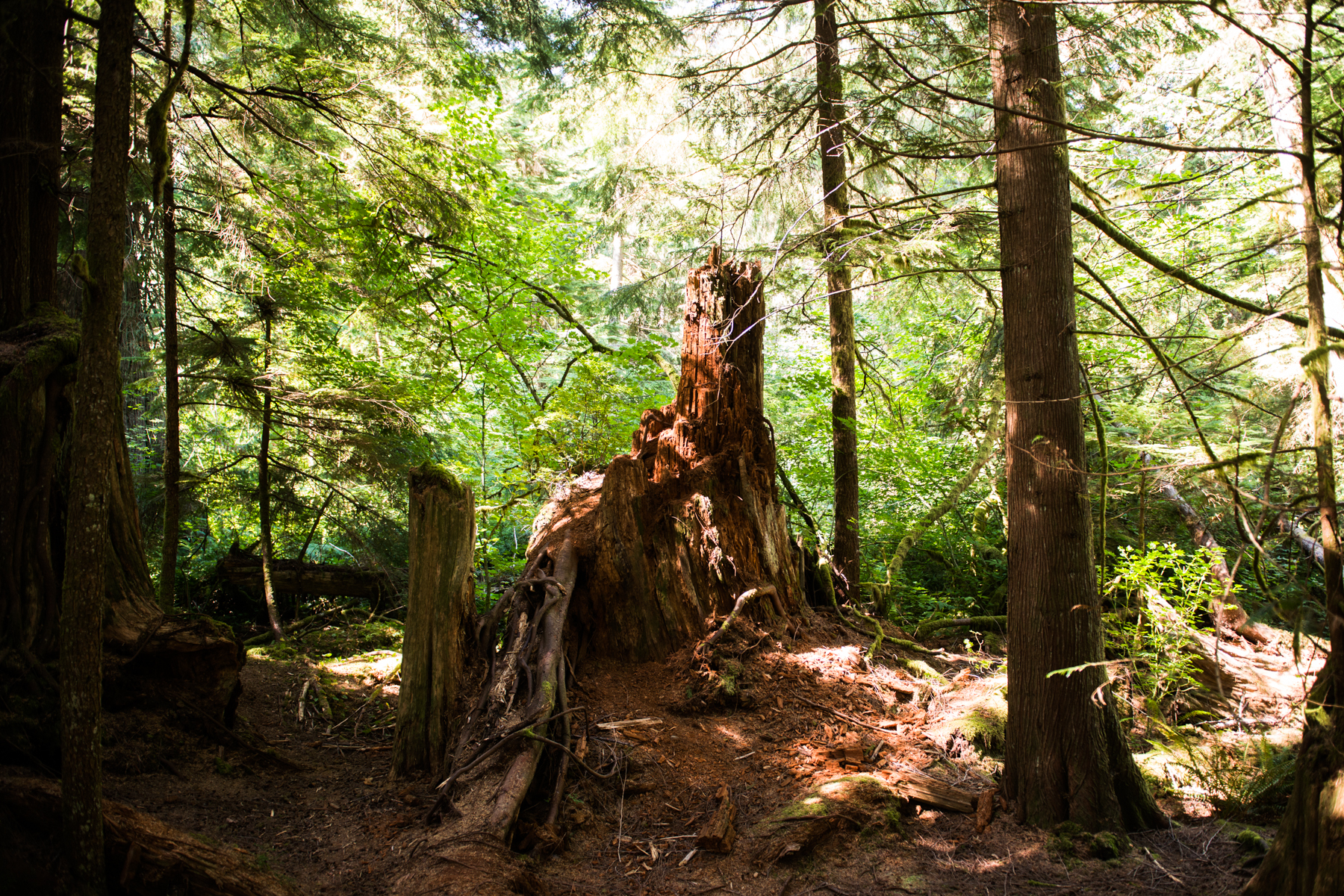The site of Bobby Briggs' childhood stomping grounds can be found in Ollalie State Park just outside of North Bend off exit 38. For a panorama of the location, check out this fan shot video. (Photo: Chona Kasinger / Seattle Refined)<p></p>