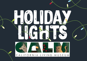 Holiday Lights at CALM Tickets Contest