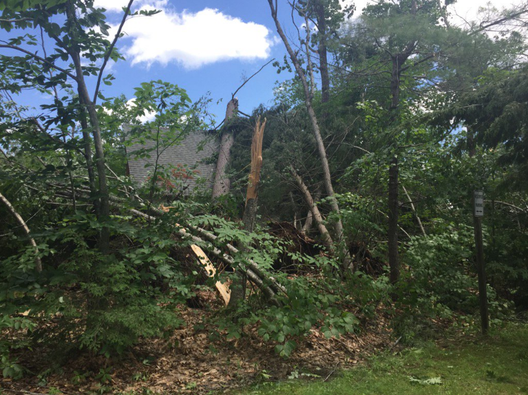 Trees collapsed on a house in Bridgton. (WGME)