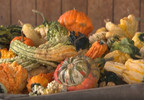 Consumer Reports: What's in canned pumpkin?