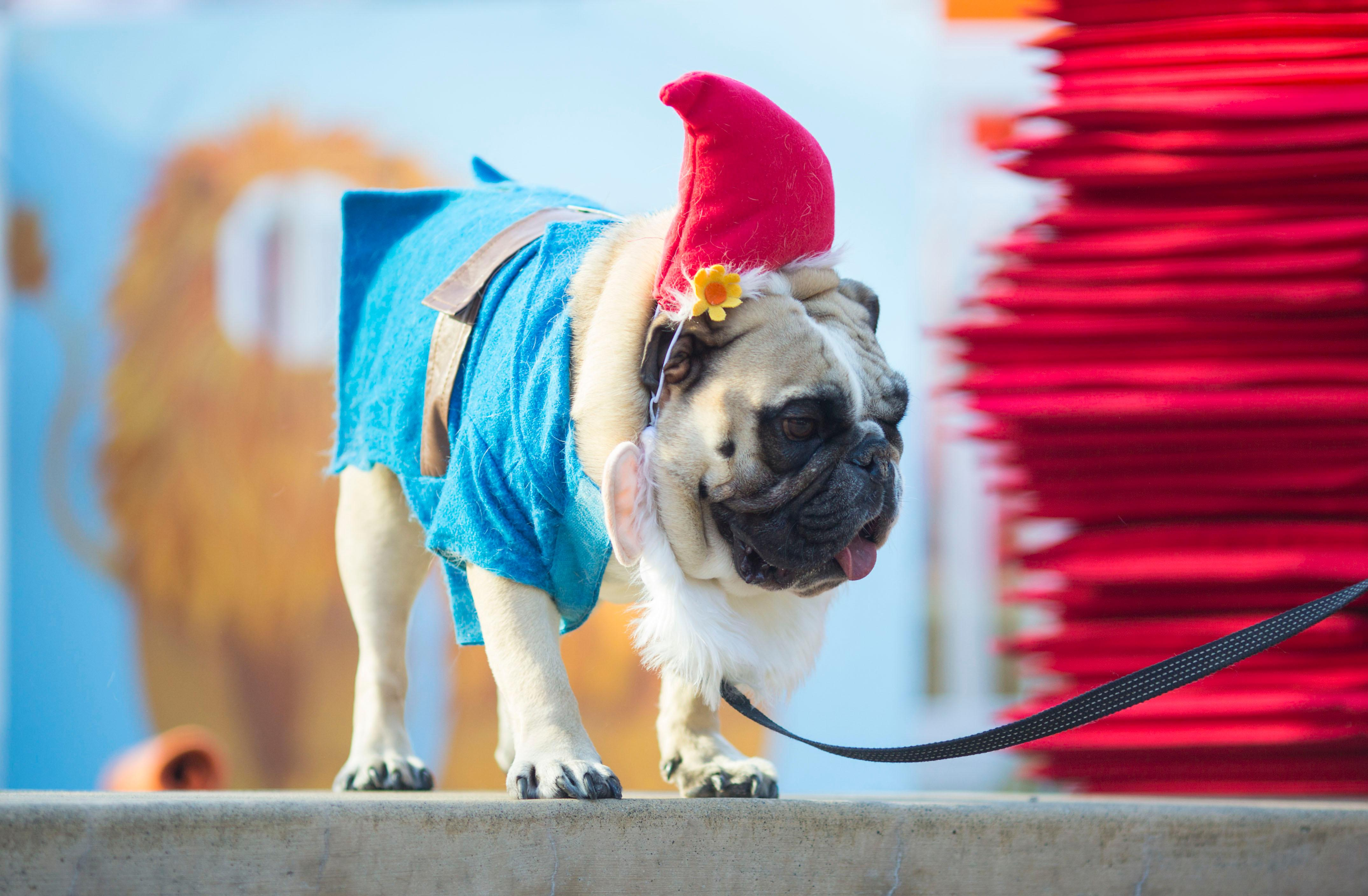 Happy Halloween!!! Amazon and Downtown Dog Lounge celebrated All Hallows' Eve with a doggy costume contest. Barktoberfest saw over 2,000 dogs and humans total, and the pug pictured on the first slide of this gallery won Best Costume, as a Fairy Godmother! (Sy Bean / Seattle Refined)