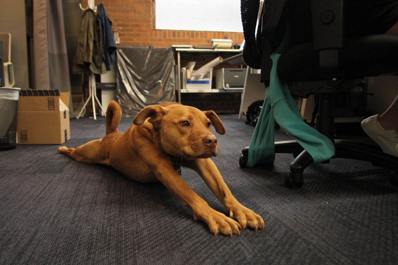 Although there's a meditation studio for humans, dogs are allowed to do their yoga wherever they want. (Amanda Andrade-Rhoades/DC Refined)