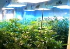 KUTV Weed grown room 111616.JPG