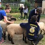 Douglas High students get hands-on ag experience as FFA program returns after 19 years