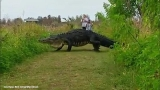 What on Earth is that? Oh, just a massive alligator taking a stroll
