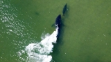 Seal narrowly escapes white shark off Cape Cod