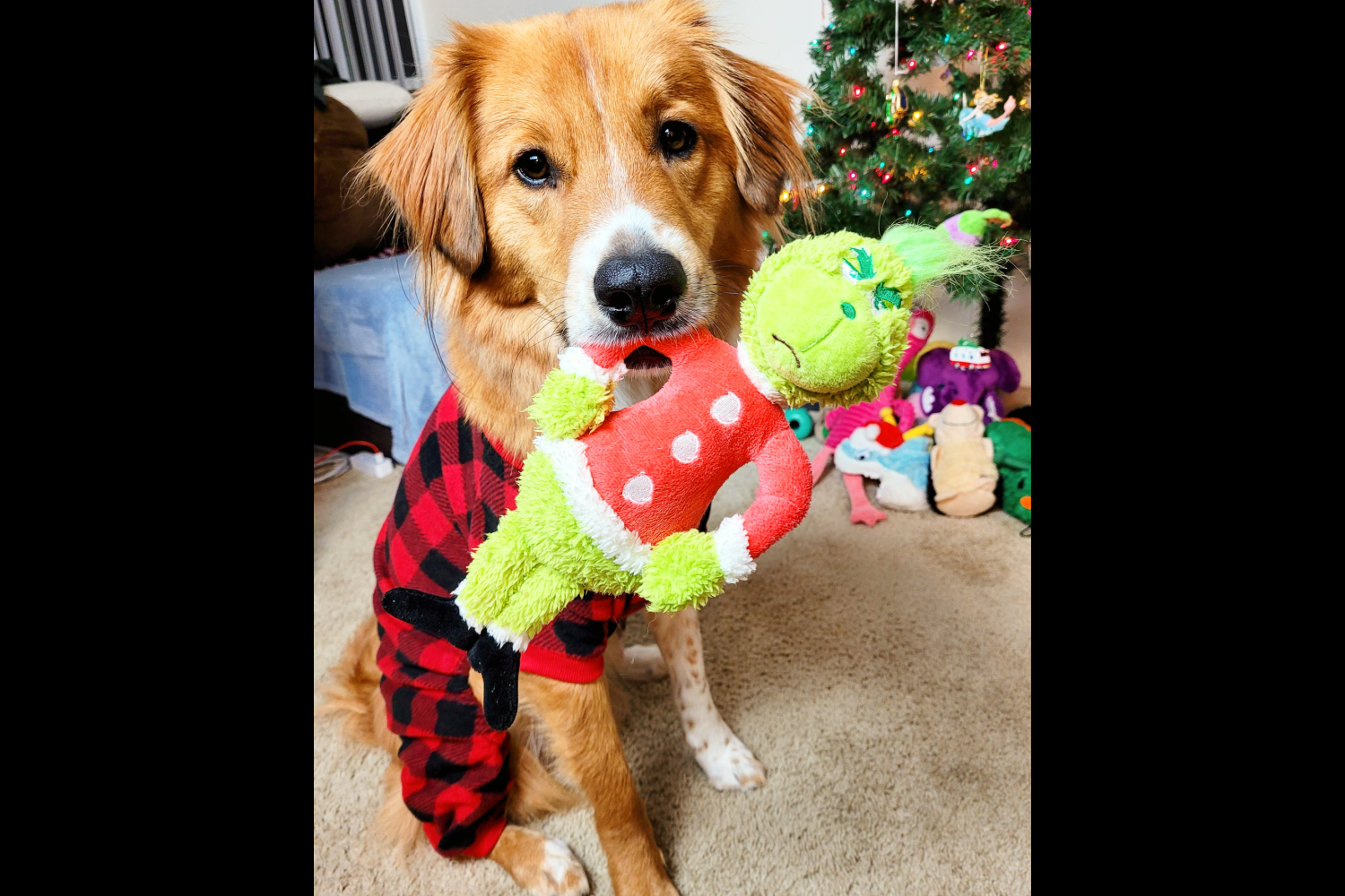 Darrel with Grinch toy{ }(Image: Hailey Adair)
