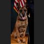 Garden City Police announces passing of retired K9