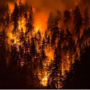 Judge orders teen charged for starting Oregon wildfire to pay $36.6M in restitution