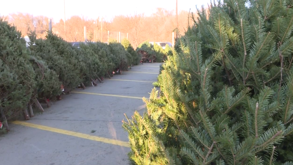 christmas trees for sale on gordon drive to support boy scouts troops - Boy Scout Christmas Trees