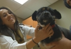 Tara-Dog at the vet.jpg