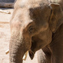 Samson the four-ton Asian elephant joins the Oregon Zoo herd