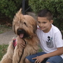 Only on 10: Dog who beat cancer helps boy with autism