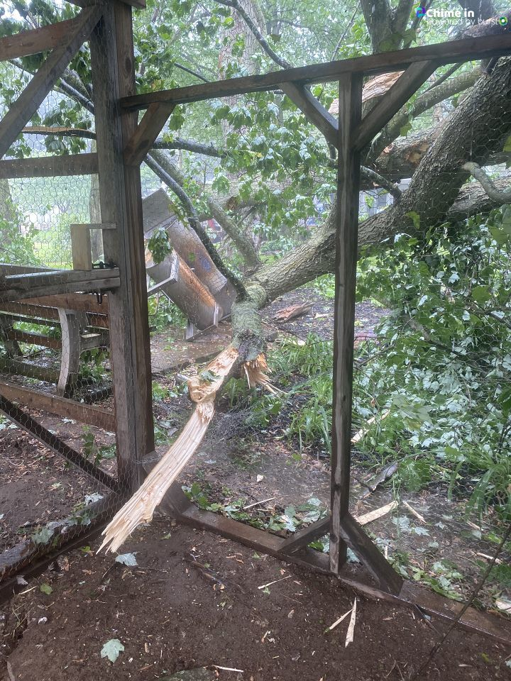 A downed tree rests against backyard structures in Bellevue, Michigan, following the June 10-11, 2020, storms that swept through the area. (WWMT/Chime In, Christin)