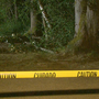 Tree branch falls on woman at Redmond park