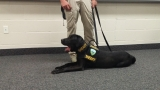 Weber County introduces its new 'porn sniffing dog'