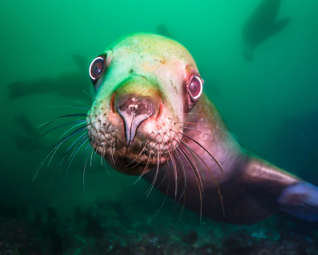 """I bought my first DSLR camera 8 years ago, and I began scuba diving a few months later. Four years ago I began to seriously wonder if my underwater shots of Puget Sound were beautiful enough and interesting enough to sell."" (Image: Drew Collins)"