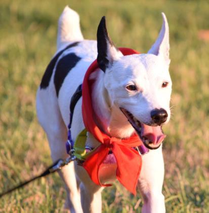 Humanerescuealliance Dogs Adopt