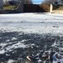 Gizzard shad die-off greets ice fishermen on Fox River