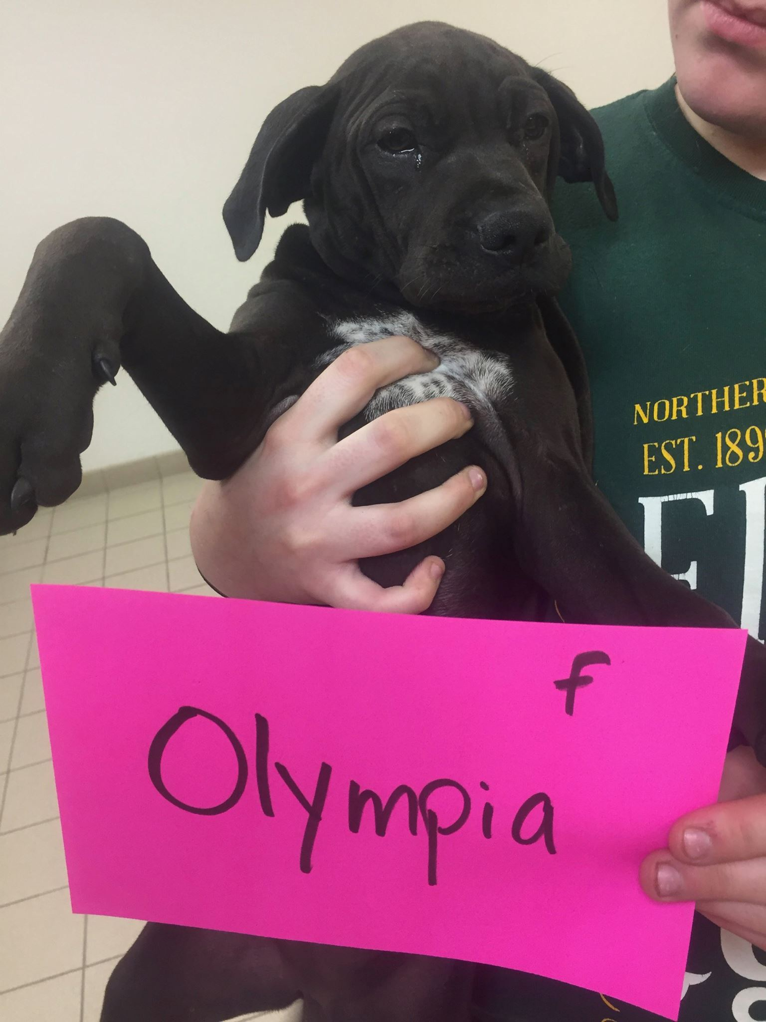 Olympia is available to meet you at the Cherryland Humane Society.