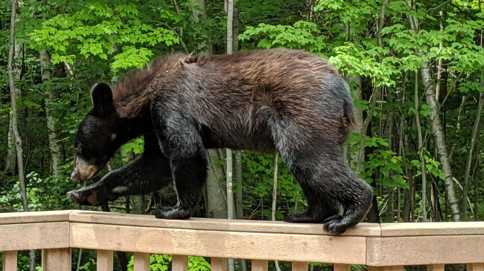 A bear walks along the railing of a deck in Suamico July 1, 2019.