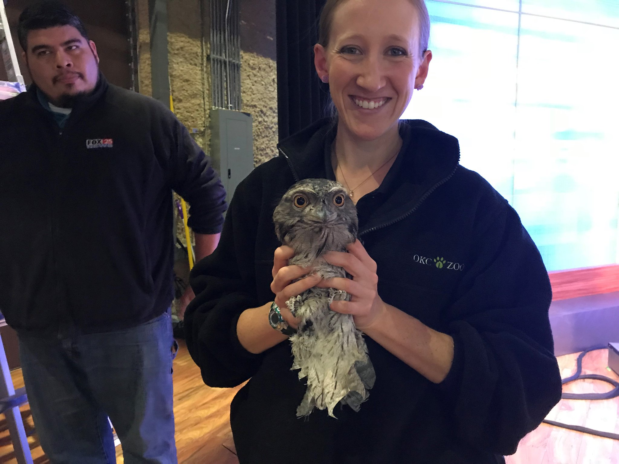 "Tawny frogmouth ""Muppet"" hung out for several hours in the rafters of the FOX 25 studio Feb. 28. (KOKH)"
