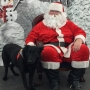 Pets get their moment with Santa