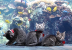 Kittens explore Georgia Aquarium 4.PNG