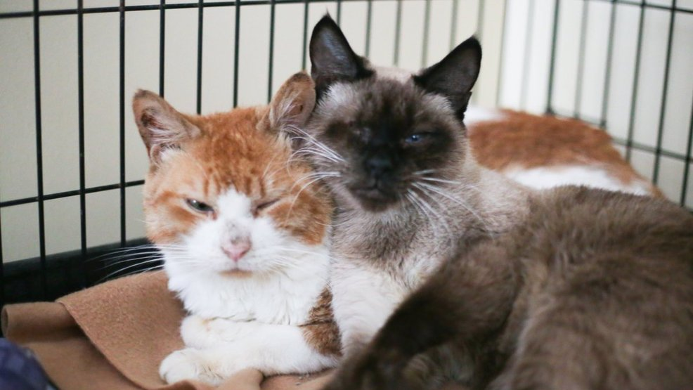 Seven Cats Survive Being Locked Up For 17 Days Without Food Water