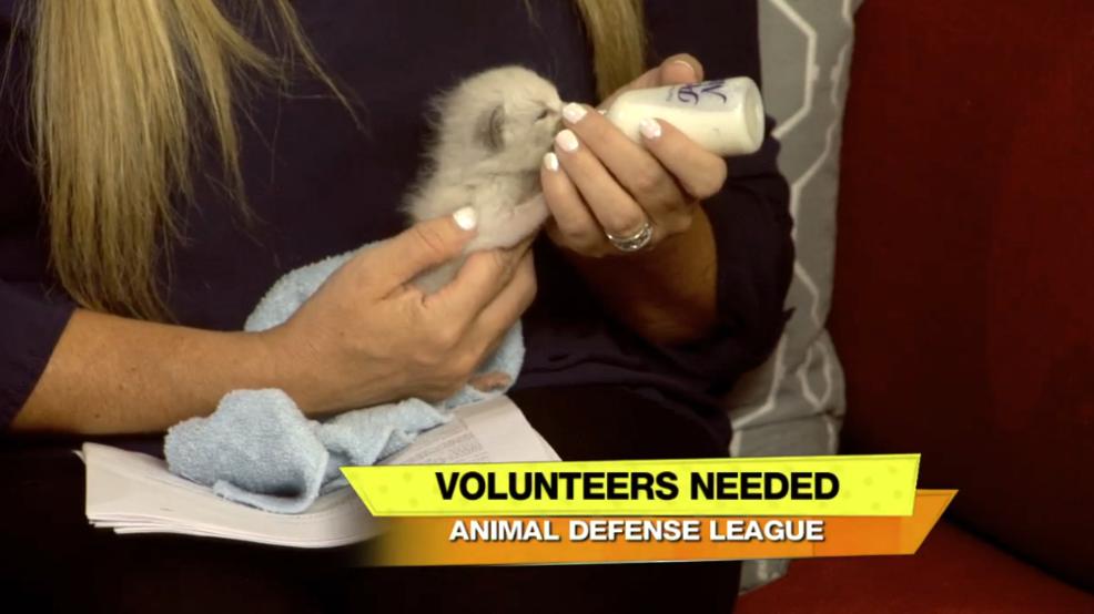 Animal Defense League Needs Your Help Woai