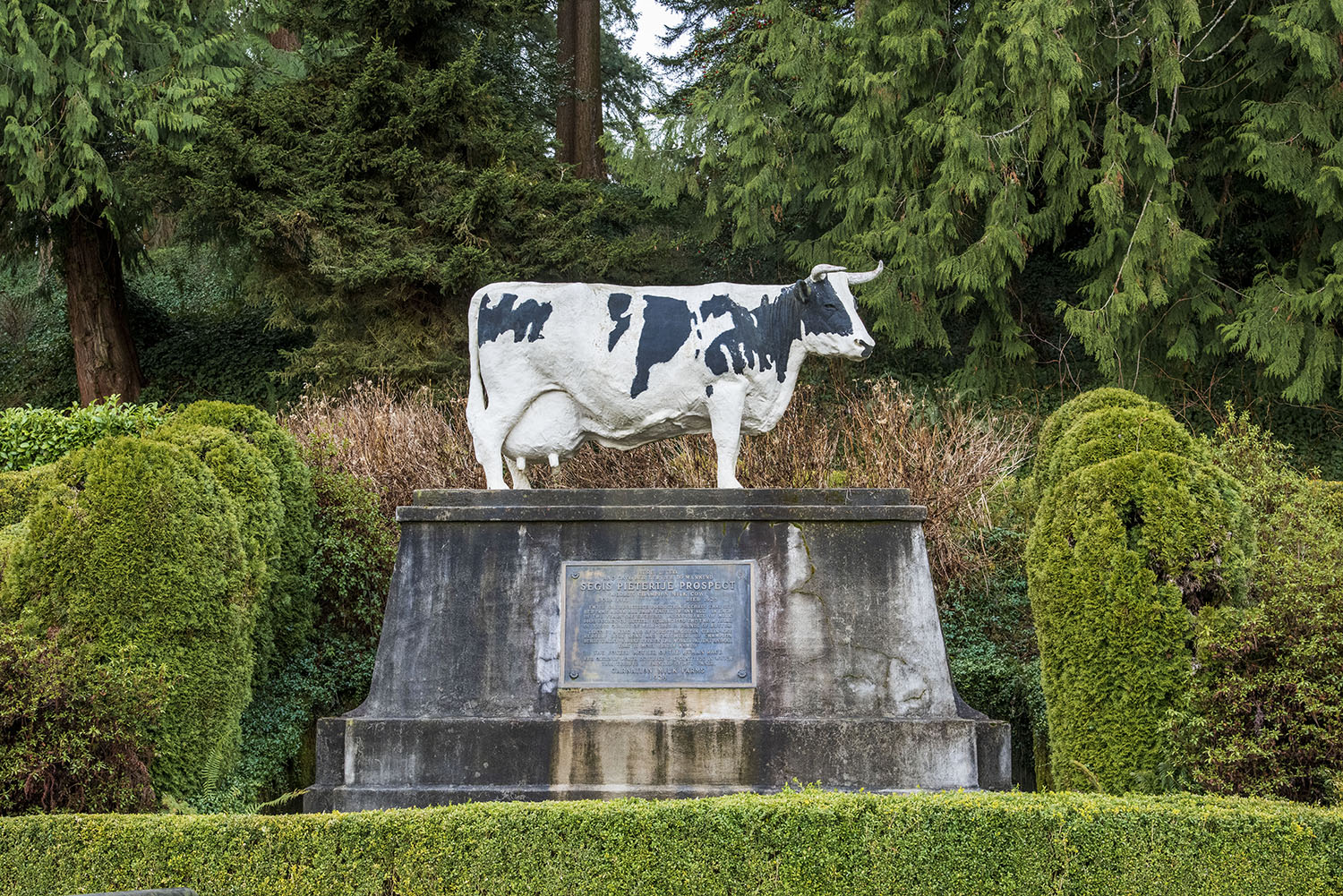 In 1920, the dairy cow and milker pair resulted in a record-breaking 37,000 pounds of milk produced. Milked six times a day for a whole year, Possum Sweetheart's impressive milk production status made her a farmland celebrity. Her name was printed in newspapers worldwide. (Rachael Jones / Seattle Refined)