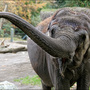 Omaha zoo holding elephant selfie contest this week