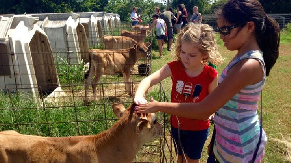 Dairy Tours In Texas
