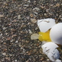 NH woman pelted with eggs after road rage incident