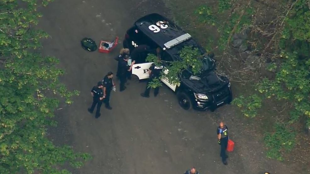 Man captured after search shuts down State Route 203 near Duvall | KOMO