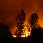 Report: Tree branches 'chafing' power line caused deadly Twisp wildfire