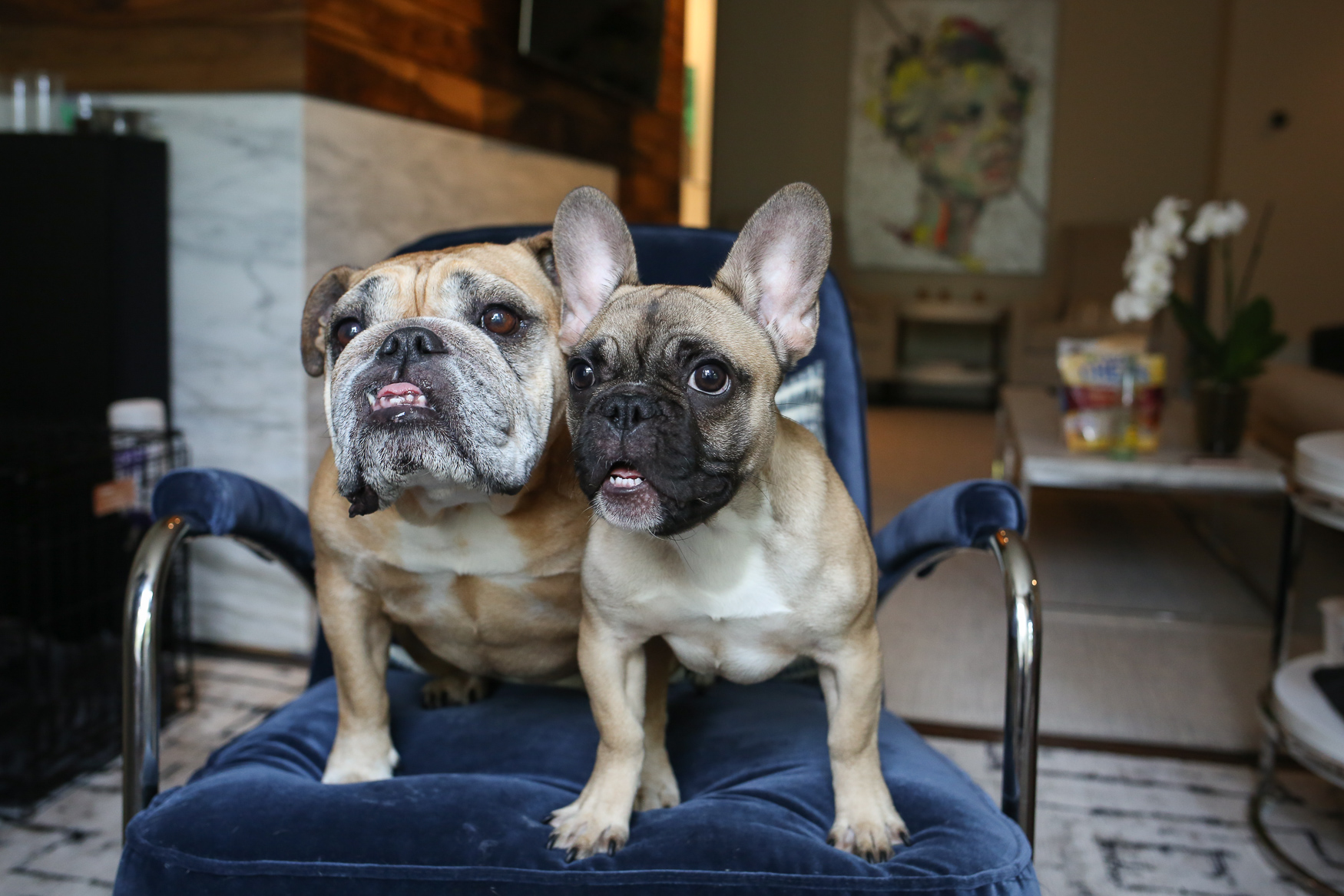 These pups had the cutest faces!{ }(Amanda Andrade-Rhoades/DC Refined)