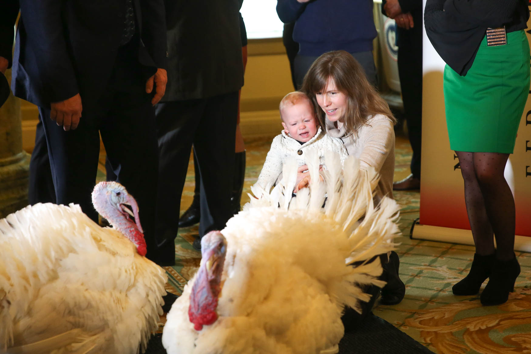 Two turkeys from South Dakota are due to arrive at the White House tomorrow, where one of them will officially be presidentially pardoned from the Thanksgiving table. In the meantime, Peas and Carrots are living it up at the{ }{ }Willard InterContinental hotel in D.C, greeting the press and enjoying the occasional{ }M&M. According to a representative from the hotel, the turkeys were selected for the honor because of their good looks and personality. Although both turkeys will be spared from the dinner table and go on to live the rest of their lives at Virginia Tech, only one will receive{ }the official presidential pardon. (Amanda Andrade-Rhoades/DC Refined){ }