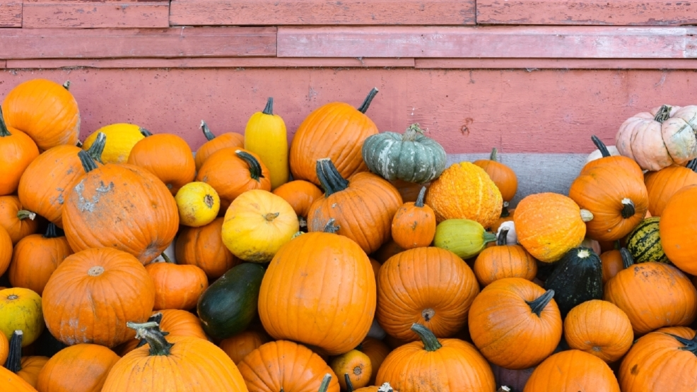 The 10 Best Pumpkin Patches to explore this fall