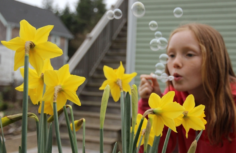 Check out Seabrook's Daffodil Festival for the ultimate celebration of spring, warm weather and all things Daffodils on March 17-19. Photo Credit:  Allison Williams