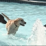 2016 Memorial Pool Doggie Paddle