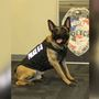 NSP, GIPD vie for K-9 grant money