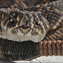 Venomous snakes interfering with murder investigation