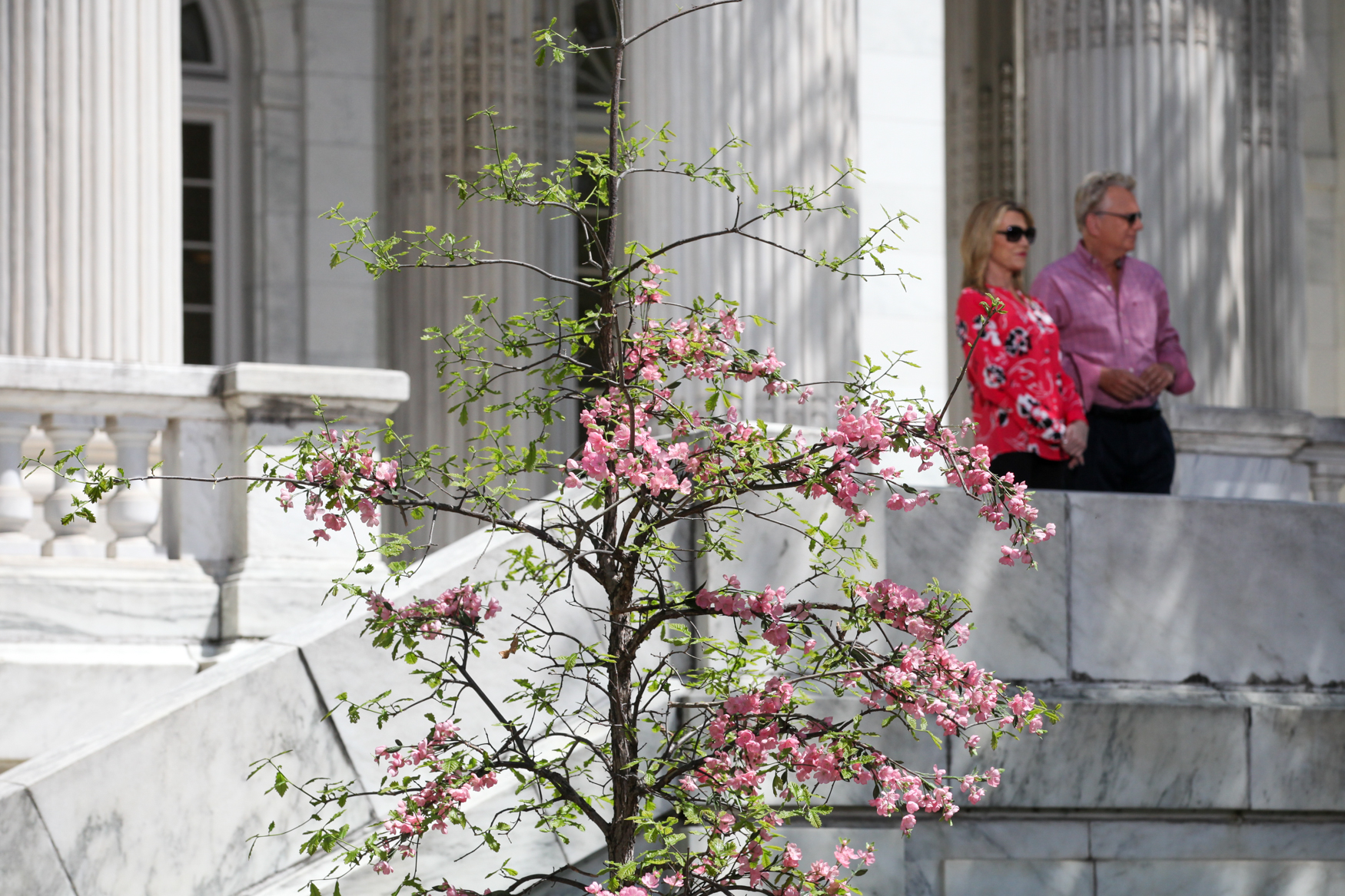 A fake tree full of cherry blossoms helps set the D.C. stage. (Photo by DC Refined)