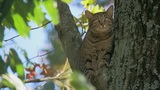 Cat in a tree prompts rescue response by Md. firefighters, deputies, animal services