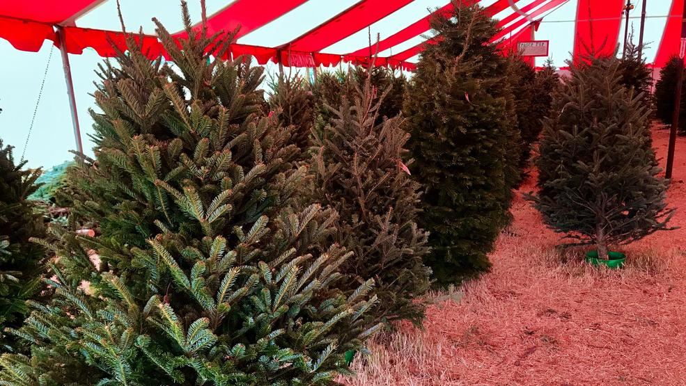 Christmas Tree Shortage.Christmas Tree Shortage Pushing Prices Up Keye