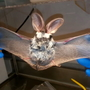 Two Coos County residents treated for contact with bats