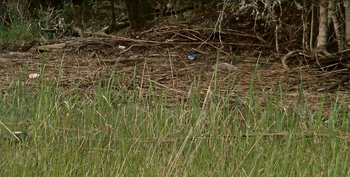The Little River River Sweep is being held this Saturday, April 16, at John Causey Landing. (WPDE)